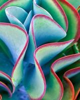 Succulent VII Fine Art Print