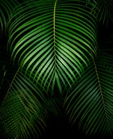 Tropical IV Fine Art Print