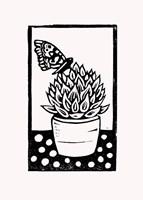 Black Succulent Fine Art Print