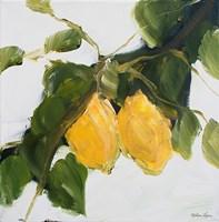Lemons II Fine Art Print