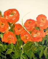 Orange Ranunculus Fine Art Print