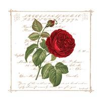 Floral V Fine Art Print