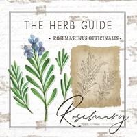 Herb Guide - Rosemary Fine Art Print