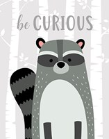 Be Curious Raccoon Fine Art Print