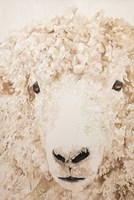 Woolly Fine Art Print