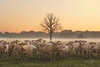 Just Come Cows and A Dead Tree Fine Art Print