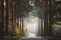 Mysterious Roads Fine Art Print