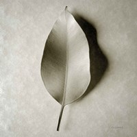 One Leaf Fine Art Print