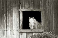 Welcome Mare Fine Art Print