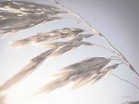 Windy Wheat Fields II Light Fine Art Print
