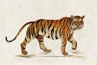Walking Tiger Light Fine Art Print
