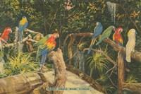 Florida Postcard II Fine Art Print