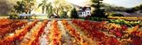Golden Vineyard Fine Art Print