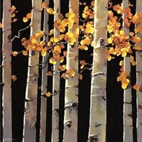 Aspen Grove Fine Art Print