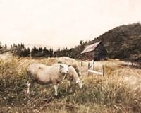 Sheep in the Meadow Fine Art Print