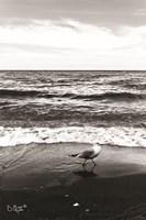 Seagull I Fine Art Print