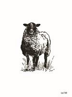 Farmhouse Sheep Fine Art Print
