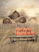 Pumpkin Harvest Fine Art Print