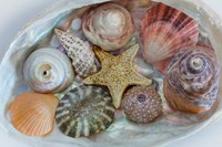 Collection Of Pacific Northwest Seashells Fine Art Print