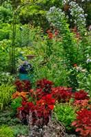 Garden Summer Flowers And Coleus Plants In Bronze And Reds, Sammamish, Washington State Fine Art Print