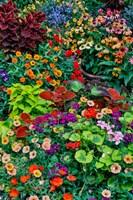 Garden In Full Bloom, Sammamish, Washington State Fine Art Print