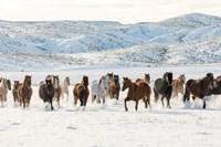 Herd Of Horses Running In Snow Fine Art Print