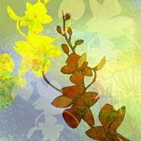 Ochid Shadows 2 Fine Art Print