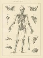 Skeleton Chart Fine Art Print