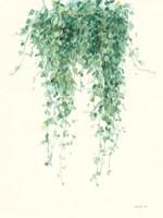 Trailing Vines I Fine Art Print