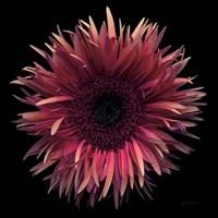 Floral Majesty IX Fine Art Print