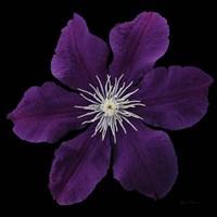 Floral Majesty VII Fine Art Print