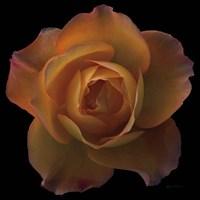 Floral Majesty V Fine Art Print