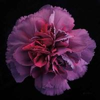 Floral Majesty IV Fine Art Print