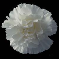 Floral Majesty III Fine Art Print