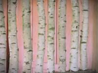Birch Logs On Pink Fine Art Print