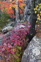 Autumn Color Foliage And Boulders Along Saint Louis River, Minnesota. Fine Art Print
