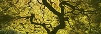 View Of Tree Branches, Portland Japanese Garden Fine Art Print