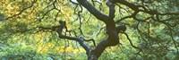 Close Up Of Japanese Maple Branches, Portland Japanese Garden Fine Art Print