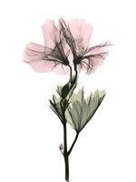 Geranium Fine Art Print