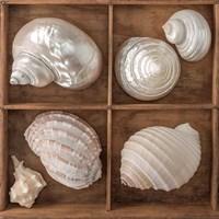 Seashells Treasures II Fine Art Print