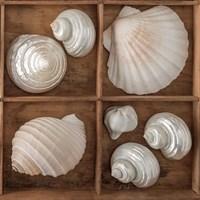 Seashells Tresasures III Fine Art Print
