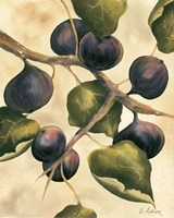 Italian Harvest - Figs Fine Art Print
