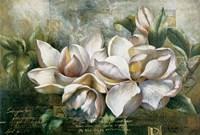 Dawning Magnolias Fine Art Print