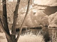 Lakefront View I Fine Art Print