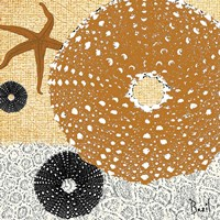 Tidepool Dreams I Fine Art Print