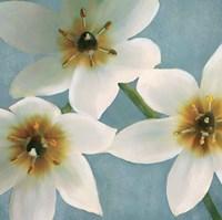 Lily Parfait I Fine Art Print
