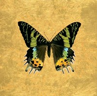 Butterfly on Gold Fine Art Print