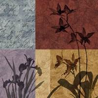 Floral Refrain II Framed Print