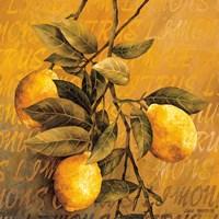 Lemon Branch Fine Art Print