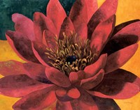 Red Water Lily Fine Art Print